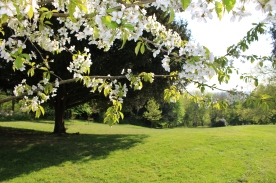 parc-fleur